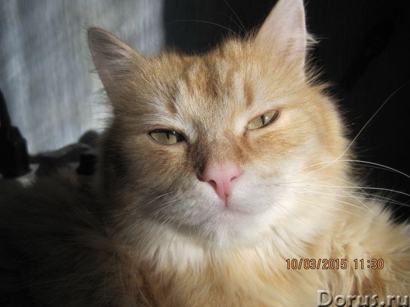 Передержка кошек в домашних условиях - Прочее по животным и растениям - Возьму на передержку кошку в..., фото 1