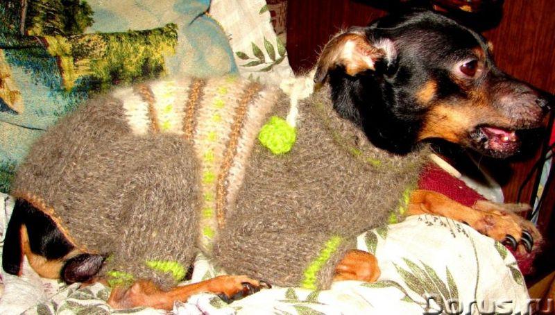Одежда для собак из собачьего пуха .Шерсть собачья - Собаки и щенки - Одежда для собак из собачьего..., фото 2