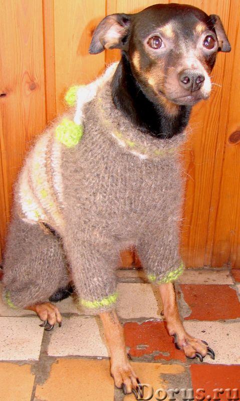 Одежда для собак из собачьего пуха .Шерсть собачья - Собаки и щенки - Одежда для собак из собачьего..., фото 4