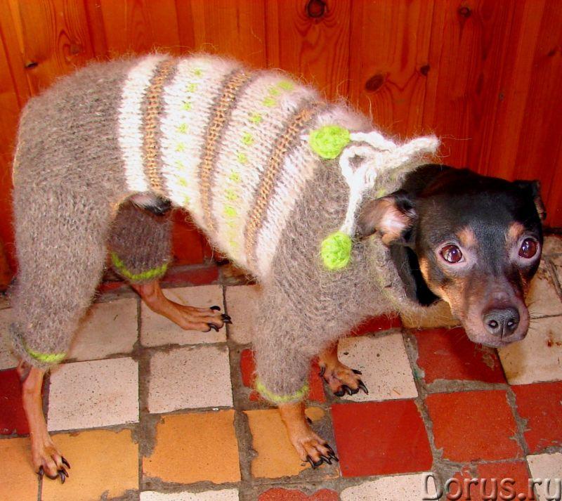 Одежда для собак из собачьего пуха .Шерсть собачья - Собаки и щенки - Одежда для собак из собачьего..., фото 5