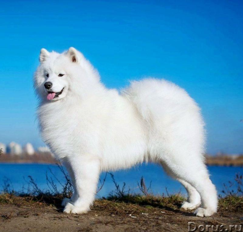 Пряжа «Белый Пушистик микс5» 185м100гр ручного прядения из собачьей шерсти - Услуги народной медицин..., фото 7