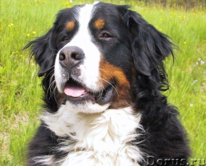 Пряжа ручного прядения «Зеня160м100гр» из подшерстка собаки .Пуховая пряжа - Услуги народной медицин..., фото 4