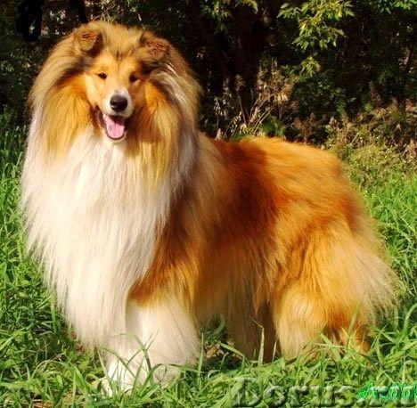 Пряжа «ФЛАМИНГО-3» 2нитка 250м100гр из шерсти собак . Целебная шерсть - Услуги народной медицины - П..., фото 3