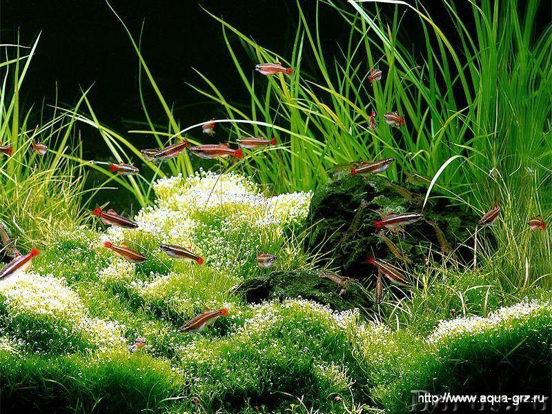Аквариум - Прочее по животным и растениям - Аквариум - обслуживание. Уход. Консультация. Дизайн. Опы..., фото 1