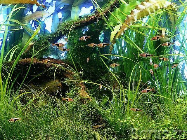 Аквариум - Прочее по животным и растениям - Аквариум - обслуживание. Уход. Консультация. Дизайн. Опы..., фото 3