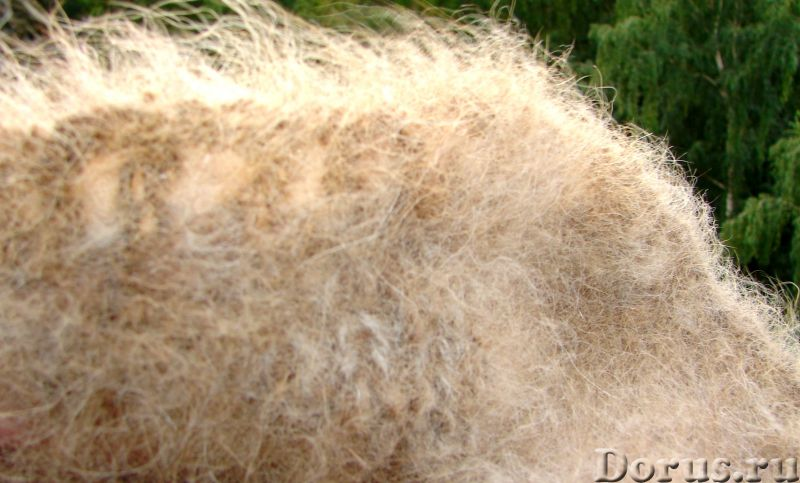 Пояс из собачьей шерсти арт№101п. Ортофен. Диклофенак. Спина лечение - Услуги народной медицины - По..., фото 10