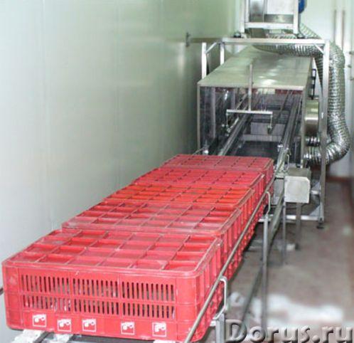 Сушка ящиков и лотков на пищевом производстве - Промышленное оборудование - ООО Агроконтинент изгото..., фото 1