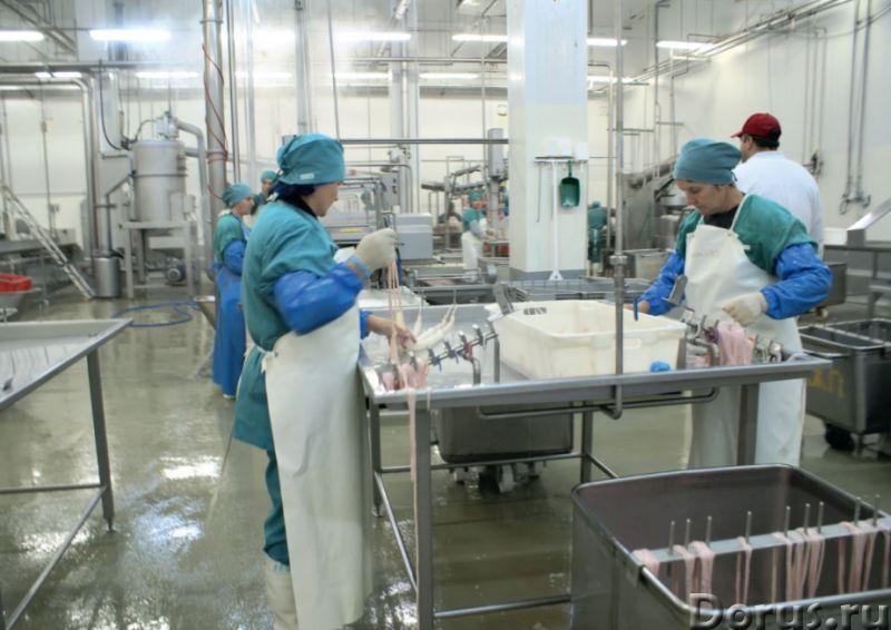 Кишечное сырьё можно и нужно перерабатывать - Промышленное оборудование - ООО Агроконтинент производ..., фото 1