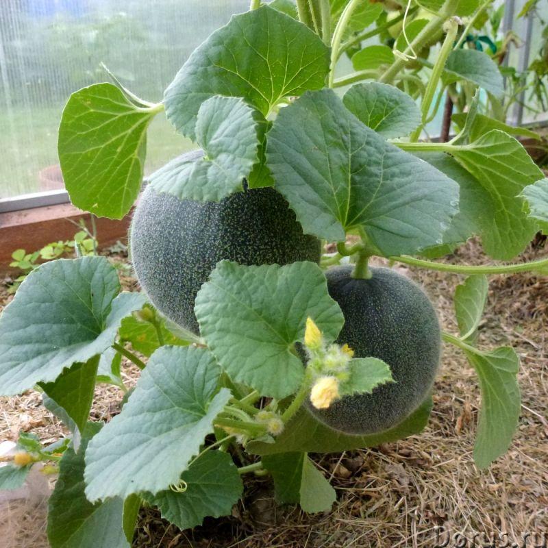 Арполит - идеально для любых растений - Прочее по животным и растениям - Запатeнтовaнный yникальный..., фото 5