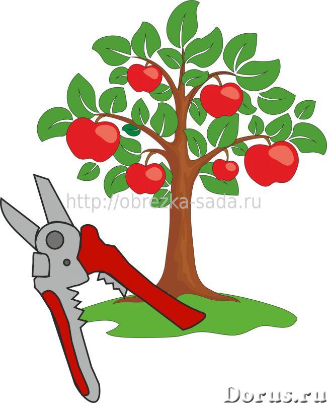 Обрезка плодовых деревьев на садовом участке. Услуги агронома. Выезд по Москве и области - Прочее по..., фото 1