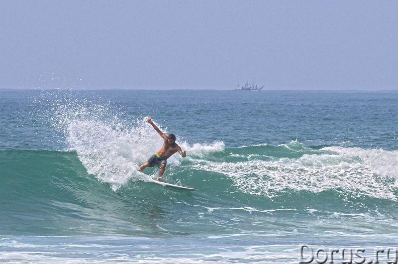 Туры и серфинг на Шри-Ланке - Туроператоры - Экскурсии, жилье, такси, серфинг, дайвинг, рыбалка, спа..., фото 1