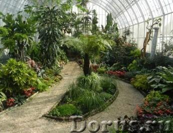 Озеленение интерьера. Зимние сады - Курсы - Программа курса Озеленение интерьера. Зимние сады : • Ис..., фото 1