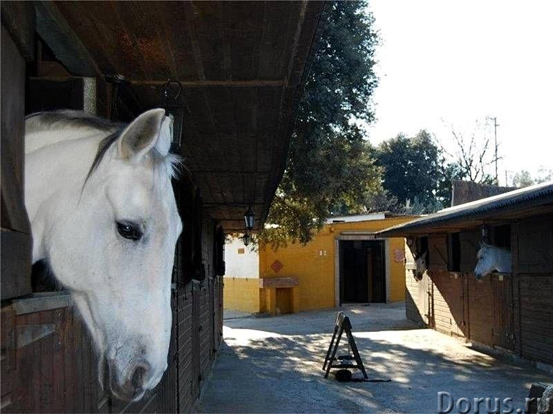 Испания. Конный клуб с домом для проживания и бассейном под Барселоной - Недвижимость за рубежом - К..., фото 1