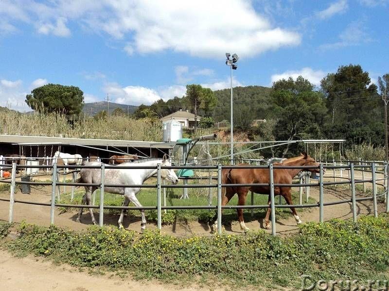 Испания. Конный клуб с домом для проживания и бассейном под Барселоной - Недвижимость за рубежом - К..., фото 4