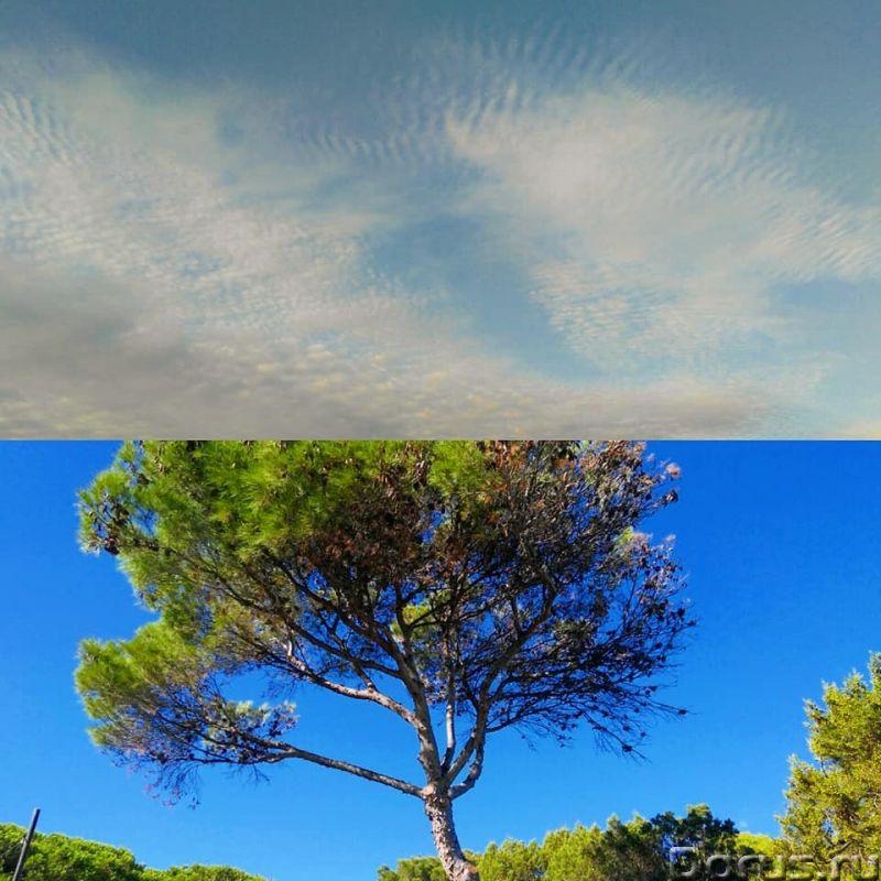 Красивая вилла, с садом, в аренд у на Сардинии - Недвижимость за рубежом - Красивая вилла, с садом..., фото 2