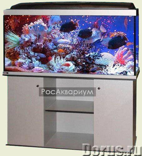 Купить аквариум в Москве - Товары для животных - Купить недорогие аквариумы в Москве для содержания..., фото 1