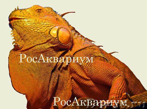 Купить террариум для игуаны - Товары для животных - На сайте РосАквариум можно купить террариум для..., фото 1