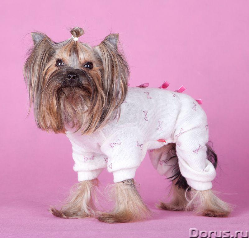 Одежда для собак - Товары для животных - ZooFashion - это интернет-магазин модной одежды и аксессуар..., фото 1