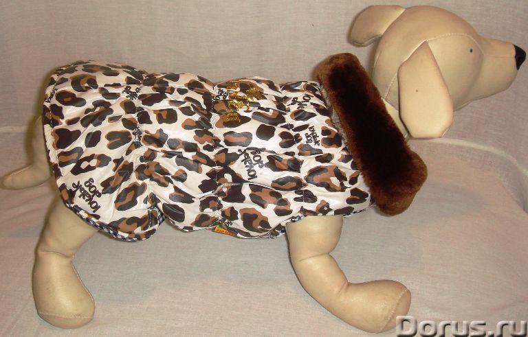 Одежда для собак - Товары для животных - ZooFashion - это интернет-магазин модной одежды и аксессуар..., фото 6