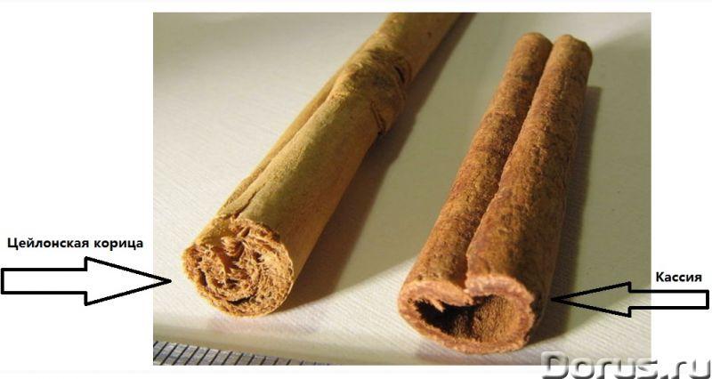 Настоящая цейлонская корица (Шри-Ланка) - Прочее по продовольствию - Предлагаем настоящую цейлонскую..., фото 2